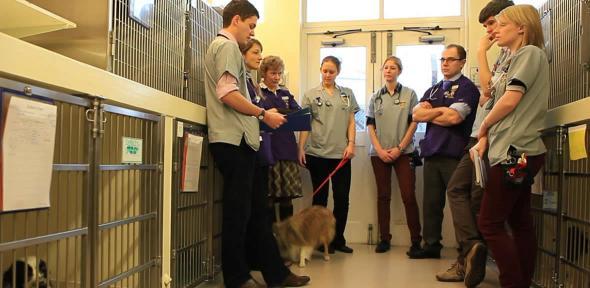 veterinary school
